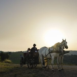 Calesse - Horse and Buggy Tour at Dievole