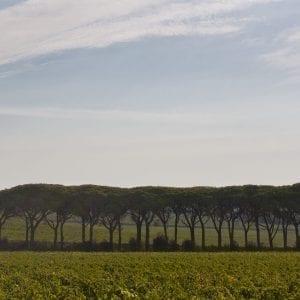 Tenuta le Colonne - Discovery Bolgheri Wine Tour