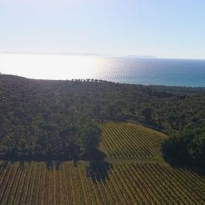 Tenuta Meraviglia Vineyards - Tenuta Meraviglia Panoramic Bolgheri Wine Tour