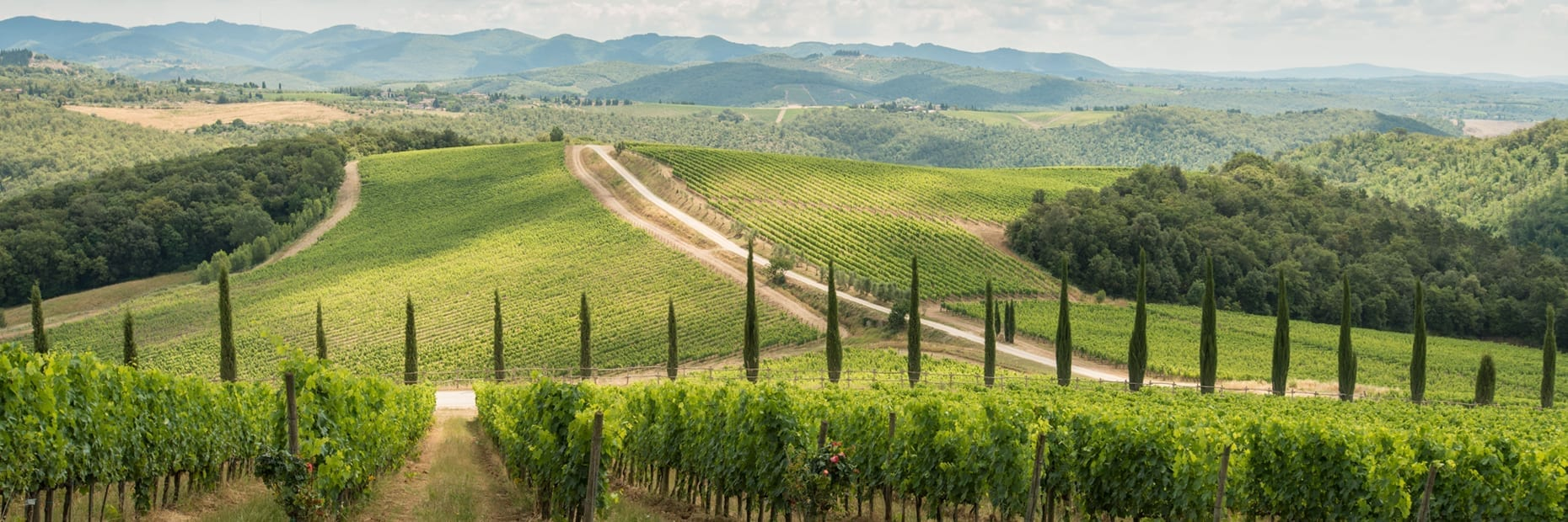 Vineyards Chianti Classico