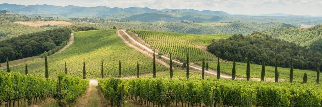 Vineyards at Dievole - Tuscany Wine Tours